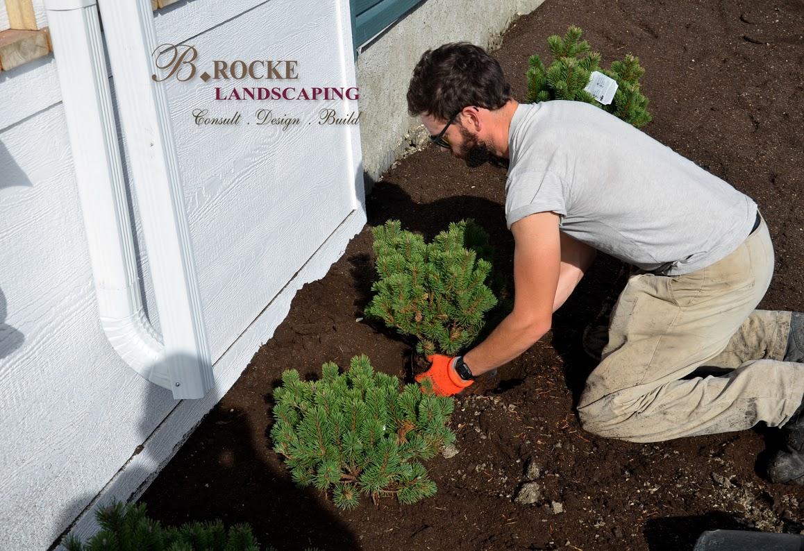 Planting | B. Rocke Landscaping - Winnipeg, Manitoba