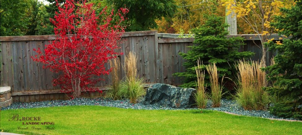 Top 5 Trees for Fall Colour B Rocke Landscaping