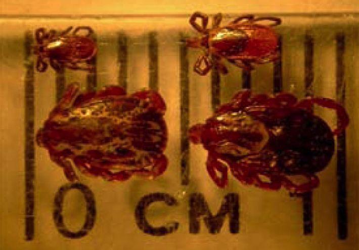 Ticks & Lyme Disease | B. Rocke Landscaping | Winnipeg, Manitoba