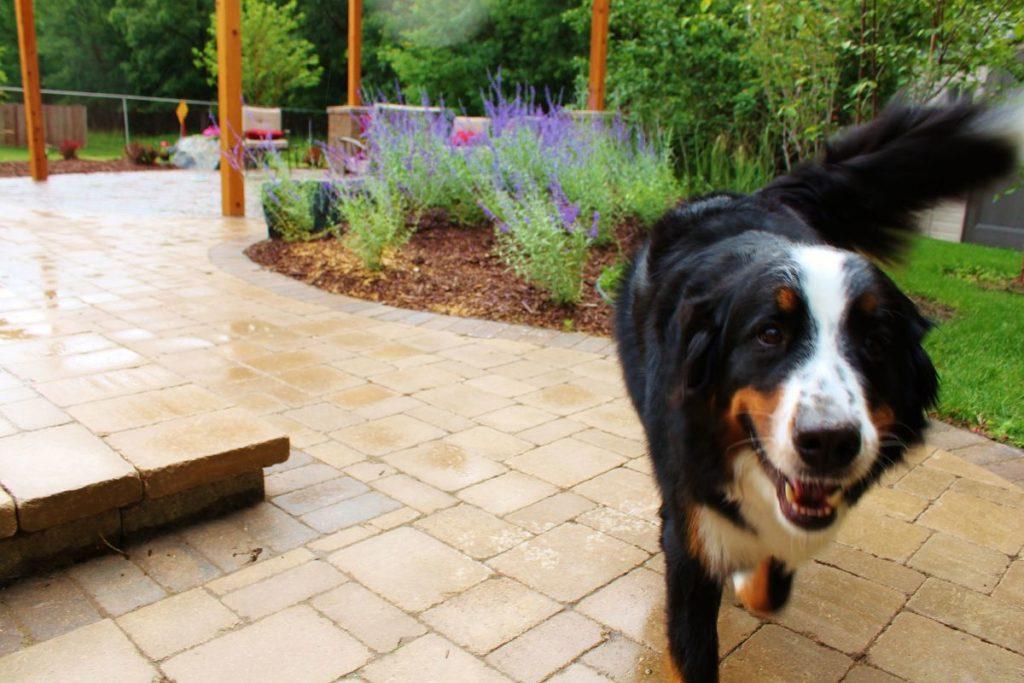 Happy Dog | B. Rocke Landscaping | Winnipeg, Manitoba
