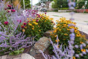 Nectar Plants | B. Rocke Landscaping | Winnipeg, Manitoba
